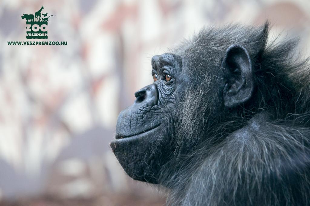Magyarország - Levendulaszüret-Állatkert-látogatás - Veszprém, Szállás nélkül